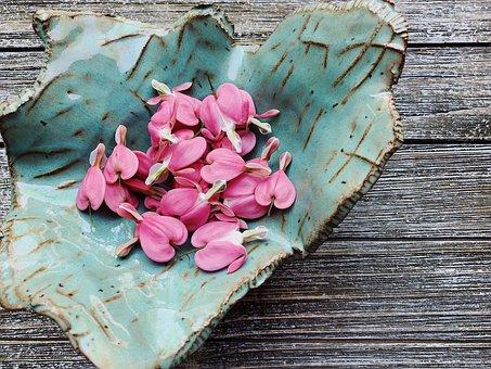 Bleeding Hearts, Pink, Flower, Spring, Floral, Garden