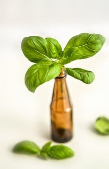 Basil, Bottle, Herb, Healthy, Medicine, Aromatherapy