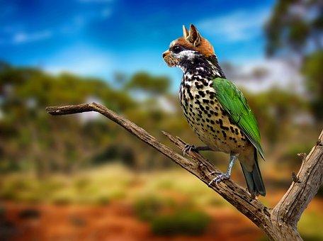Digiart, Cat, Bird, Animal World, Hybrid, Photoshop Art