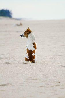 Dog, Alone, Animal, Pet, Cute, Canine, Mammal, Domestic