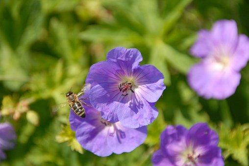 Flower, Bee, Garden, Blossom, Bloom, Nature, Close