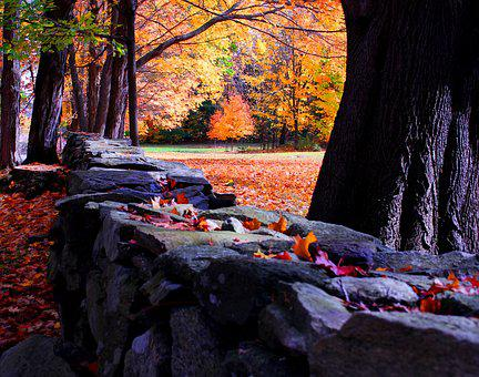 Fall Leaves, Country, New England, Stone Wall, Oak Tree
