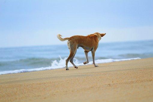 Dog, Beach, Animal, Cute, Ocean, Sea, Water, Nature