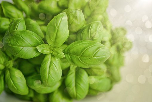 Basil, Wallpaper, Green, Herb, Food, Fresh, Organic