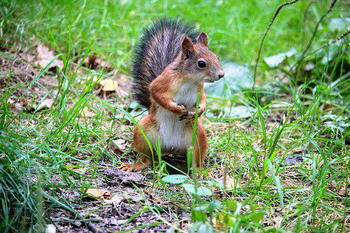 Squirrel, Forest, Living Nature, Tree, Park, Nature