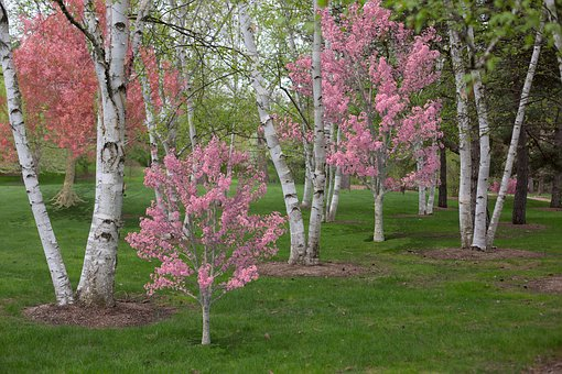 Spring, Pink, Flowering Trees, Blossoms, Nature