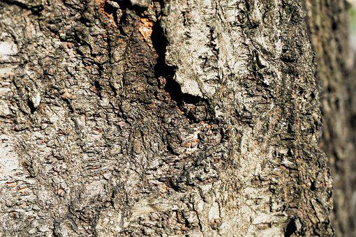 Patterns, Tree Texture, Rough Surface