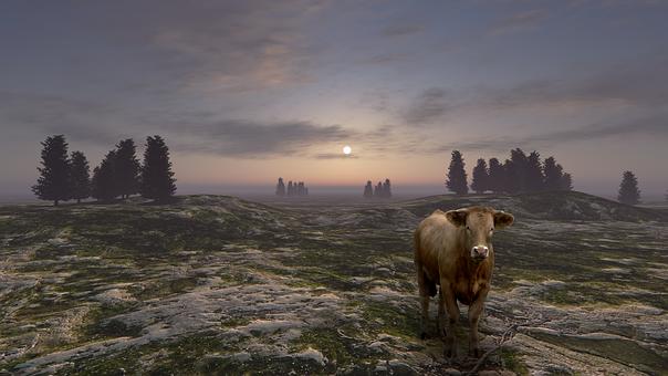 Cow, Landscape, Field, Nature, Rural, Cattle, Sky