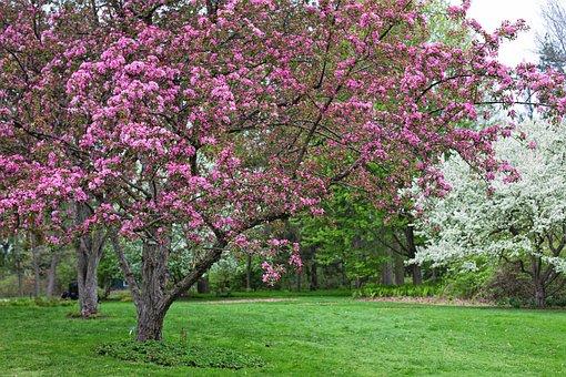 Spring, Background, Backdrop, Spring Background