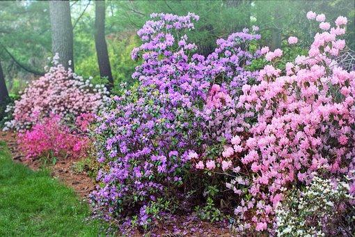 Spring, Flowering Trees, Purple, Pink, Nature, Garden