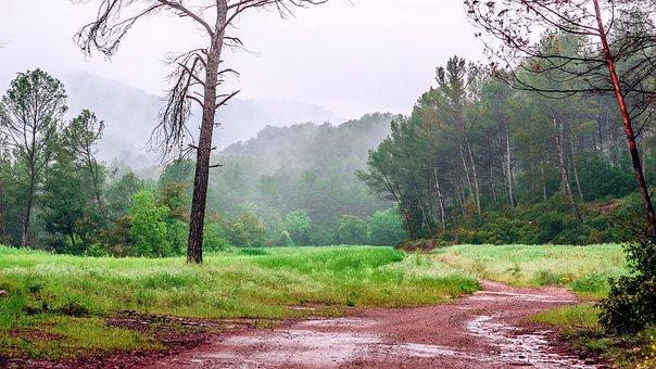 Path, Trail, Landscape, Hiking, Trees, Nature