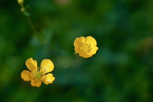 Flower, Flowers, Yellow Flowers, Delicate Flower