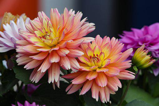 Flowers, Bouquet, Beautiful, Dark Background, Tea