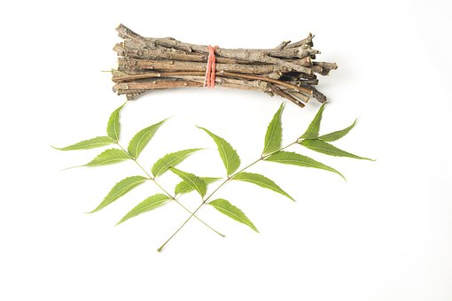 Ayurveda, Ayurveda Herbs, Beauty, Branch, Chew, Dental