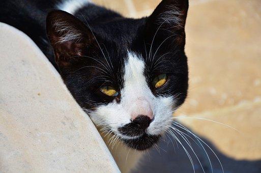 Cat, Animal, Cute, Pet, Kitten, Mammal, Young, Kitty