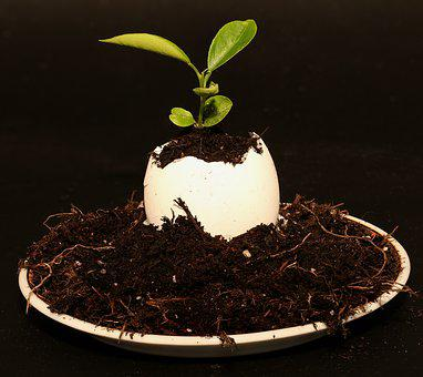 Egg, Plant, Eggshell, Decoration, Close, Deco-ei