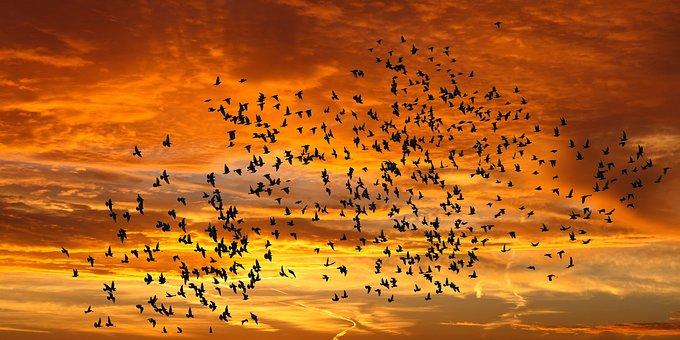 Emotions, Nature, Sunrise, Bird Flight, Sunset