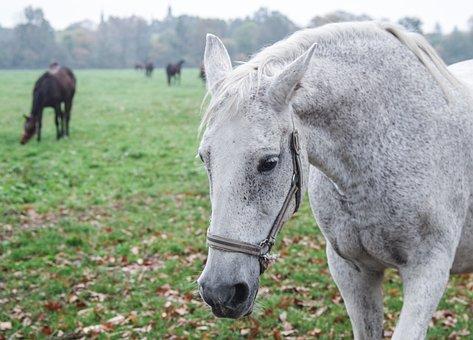 The Horse, White, Gray, Penalties, Horses
