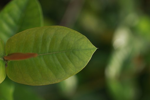 Green, Nature, Green Leaves, Palma, Garden, Plant Green