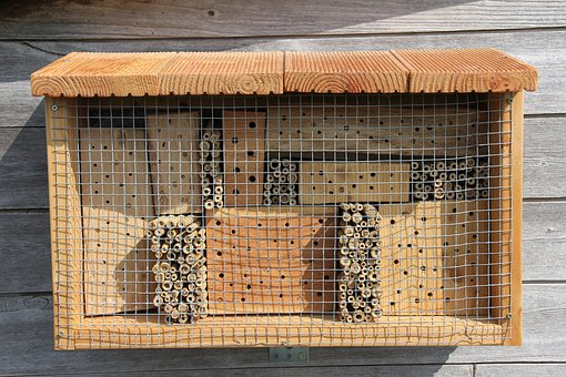 Insect Hotel, Mason Bee, Hornfaced Mason Bee, Wasp