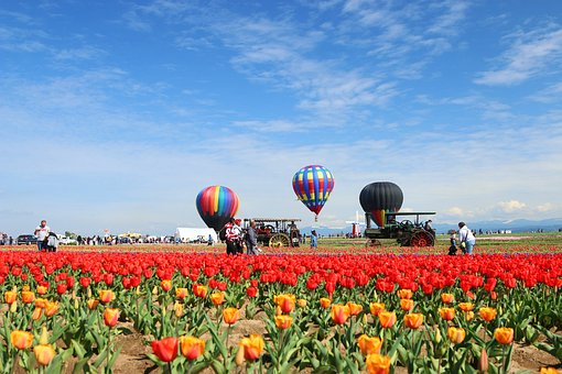 Tulip, Hot Air Balloon