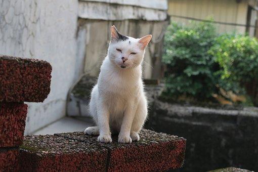 Cat, Insomnia, Animal