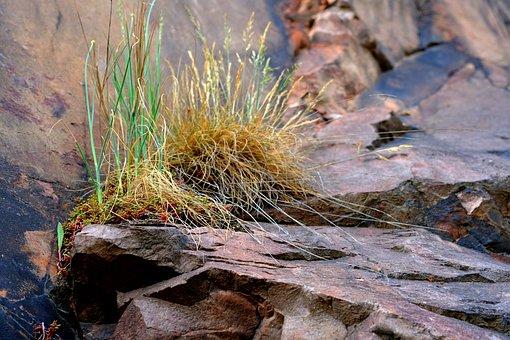 Grasses, Rock, Nature, Hiking, Mountains, Landscape