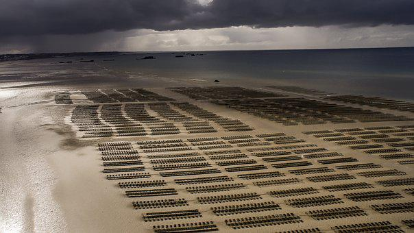 Drone, Beach, Sea, Aerial Photo, Nature, Landscape