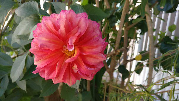 Nature, Plant, Leaf, No Person, Flower, Garden