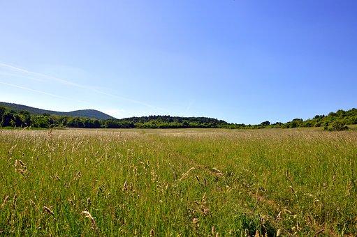 Field, Landscape, Rural Landscape, Summer, Nature