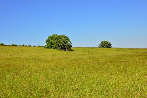 Landscape, Field, Rural Landscape, Nature, Meadow
