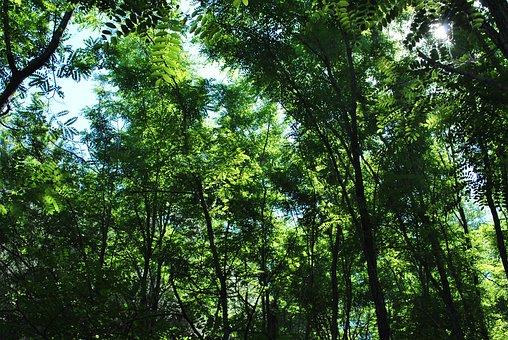 Landscape, Trees, Mountain Landscape, Nature, Tree