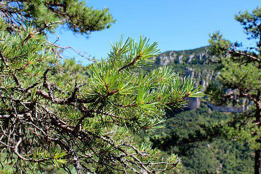 Mountains, Vista, South Of France, Nature, Tree, Trees