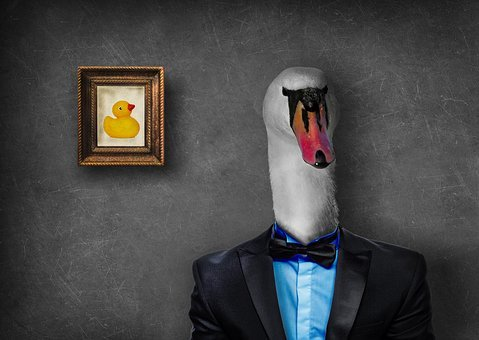 Mr, Swan, Duck, Suit, Photoshop, Photomanipulation