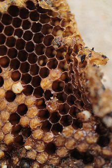 Hive, Bees, Garden, Magnolias, Pollination