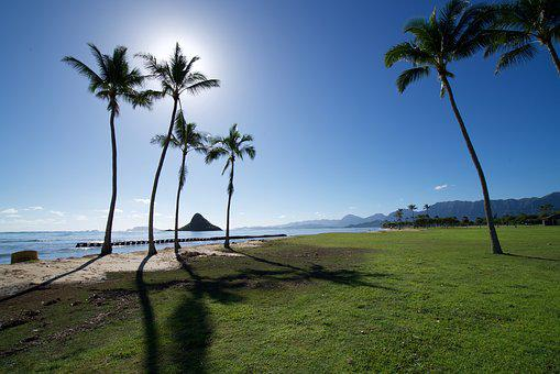 Palm Tree, Sea, Landscape, Scenery, Recreation Area