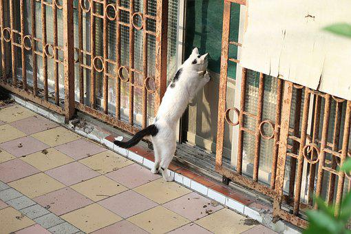 Cat, Stairs, Community, Thief, Peek, Sand The Door