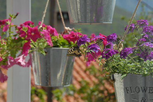 Butterfly, Flowers, Nature, Spring, Greece, Pots