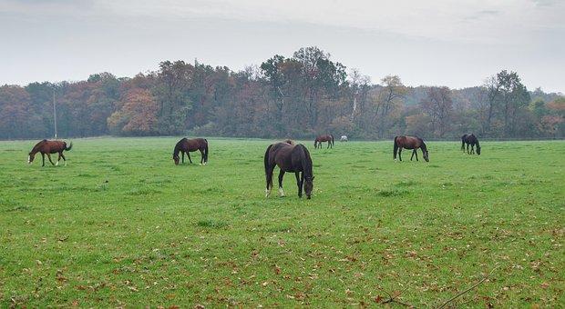 Stud, Horseback Riding, Field, Farm, The Horse, White