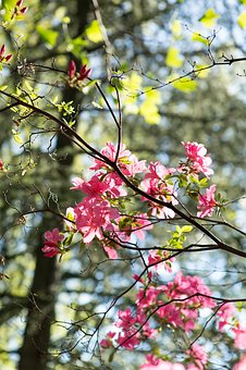 Flowers, Branch, Trees, Spring, Nature, Tree, Bloom