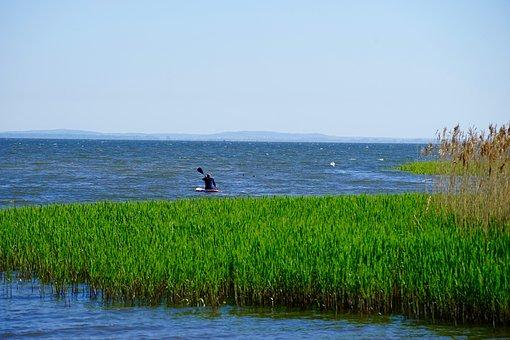 Stettiner Haff, Reed, Canoeing, Water, Nature