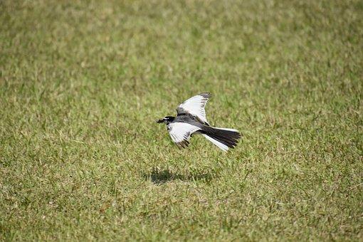 Animal, Park, Lawn, Bird, Wild Birds
