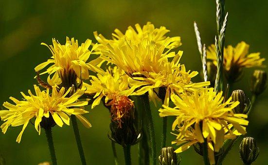 Wild Flowers, Bush, Shrub, Pointed Rain, Early Summer