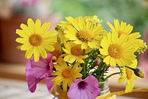 Flowers, Wildflowers, Spring, Margaret, Summer, Garden