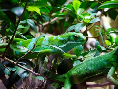 Nature, Zoo, Lizard, Animal, Chameleon, Wild Animal