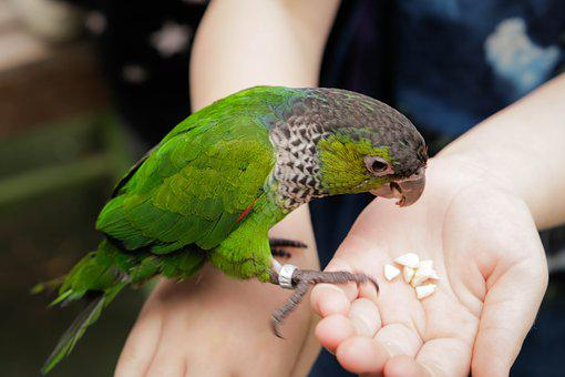 Nature, Bird, Feather, Green, Colorful, Parrot