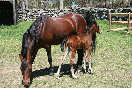 Foal, Mare, Horse, Mother And Baby, Love, Care