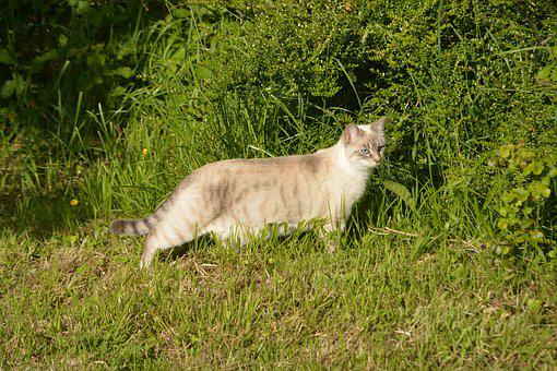 Cat, Pussy Godinette, Feline, Domestic Animal, Animal