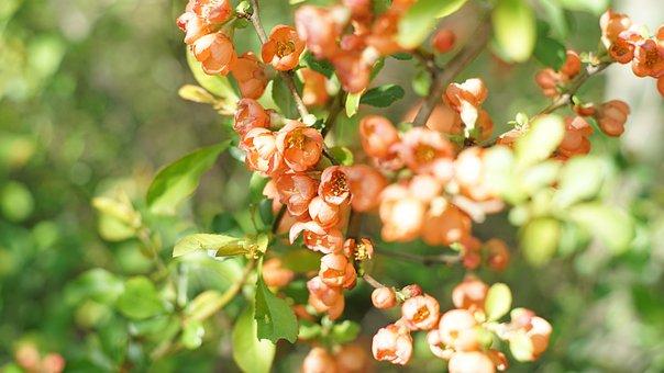 Bush, Flowers, Nature, Summer, Plant, Closeup, Bloom