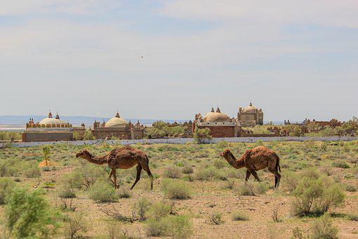 Camel, Desert, Animals, Nature, Heat, Journey, Animal